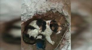 Kot utknął w rurze